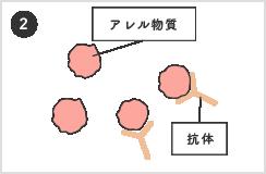体が抗体を作り結合 イラスト
