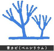 青カビ(ペニシリウム) イラスト